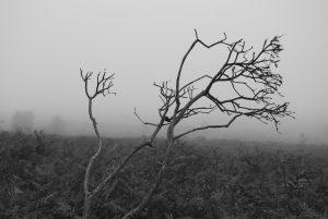 jade-solitude